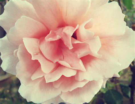 Flower Vintage vintage flowers 2 literary designs