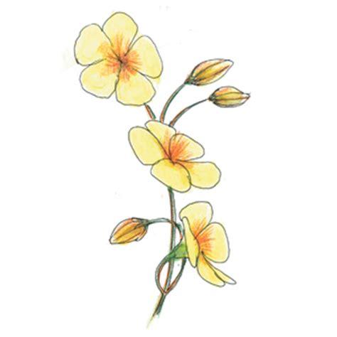 fiori di bach paura giardini