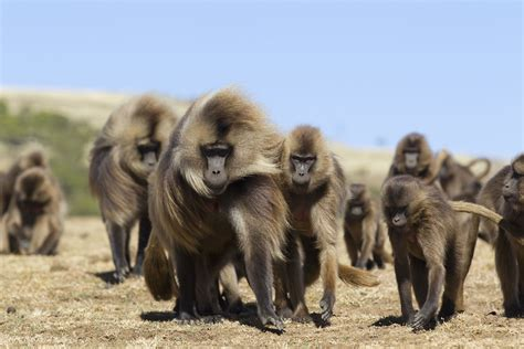 106 Animals With Unusual Group Names Groupings Of Animals