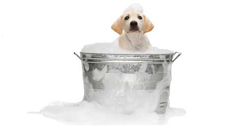 fare il bagno al