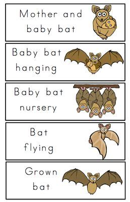 bat life cycle printable from preschool printables on