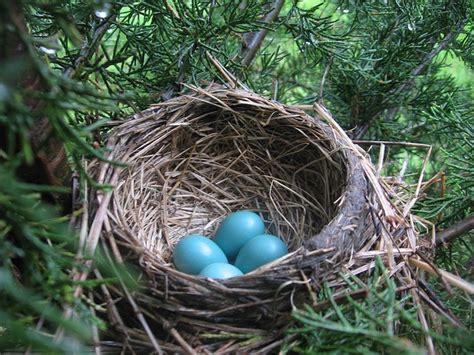 eggs robin nest quot feel goods quot pinterest