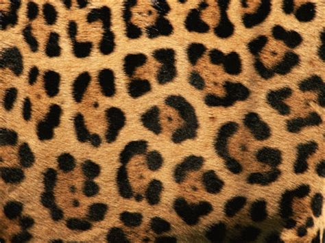 jaguar pattern house cat erica bunker diy style the art of cultivating a stylish