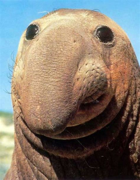 goofy flat top haircut top 10 gelukkigste dieren op aarde alletop10lijstjes