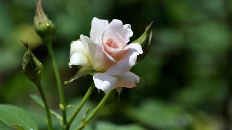 imagenes de flores naturales gratis musica se llama amistad quot con imagenes de flores youtube