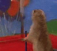 Dramatic Squirrel Meme - dramatic chipmunk image gallery know your meme