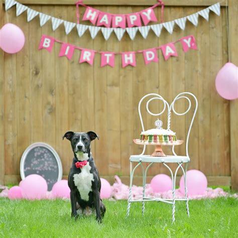shih tzu singing happy birthday best 25 happy birthday puppy ideas on boston terrier cake happy birthday