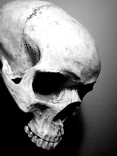 Big Skull Reference Images Pack for Airbrush