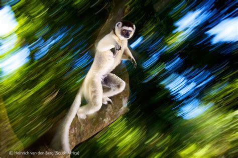 imagenes animales movimiento imagenes con movimiento de animales imagui