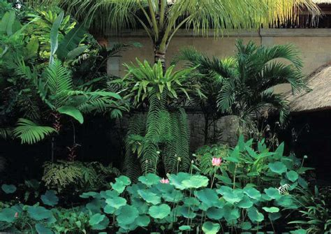 landscape design indonesia 1000 images about tropical garden on pinterest tropical