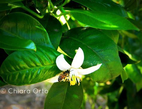 linguaggio segreto dei fiori dizionario il linguaggio segreto dei fiori