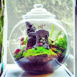 terrarium timmy