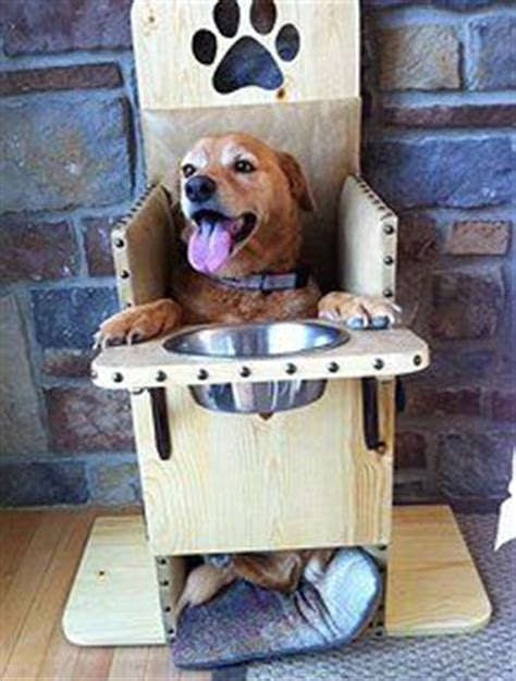 How To Build A Bailey Chair For Dogs by Megaesophagus On Breaking Benjamin Dogs And