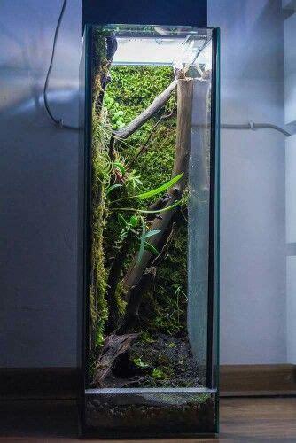 frog terrarium image  chris mejia  reptiles