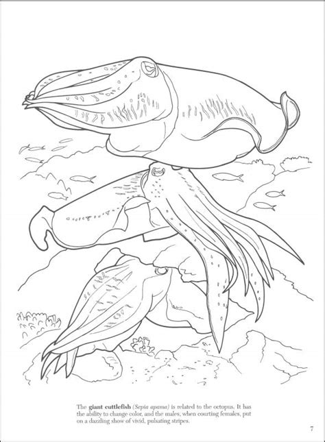 great coral reef coloring pages coloring pages