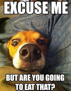 Memes Without Words - funny animal memes without bad words image memes at
