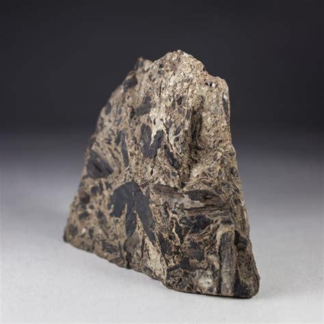 Fossil 3 3cm fossil ginkgo leaf ginkgo huttonii 10 5 x 8cm