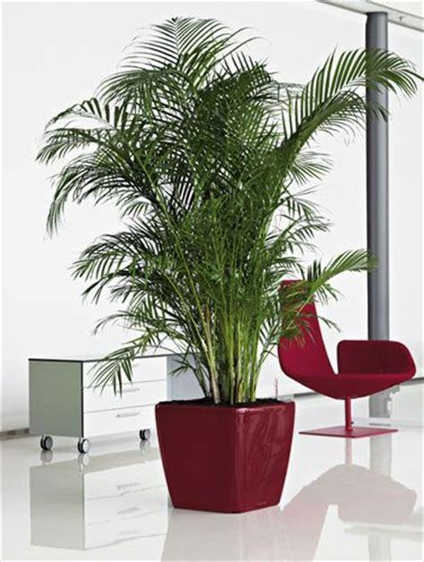 office plant office plants office plants snake plant for amazing