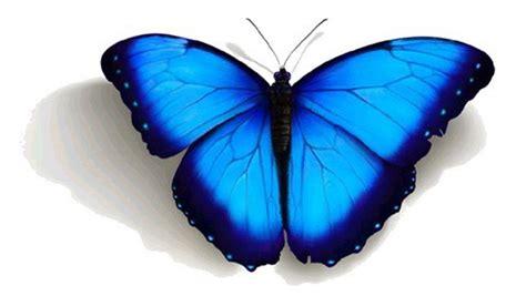 imagenes de mariposas de verdad cuentos cuentos art 237 culos y susurros de hadas