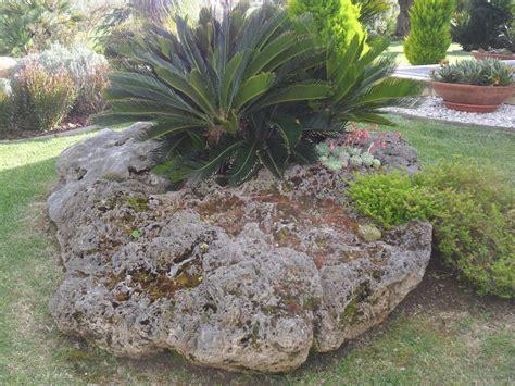 giardini rocciosi piante piante grasse e giardini rocciosi serveco di marco di