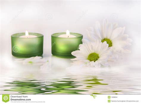 imagenes velas verdes las velas y las margaritas verdes acercan a la reflexi 243 n