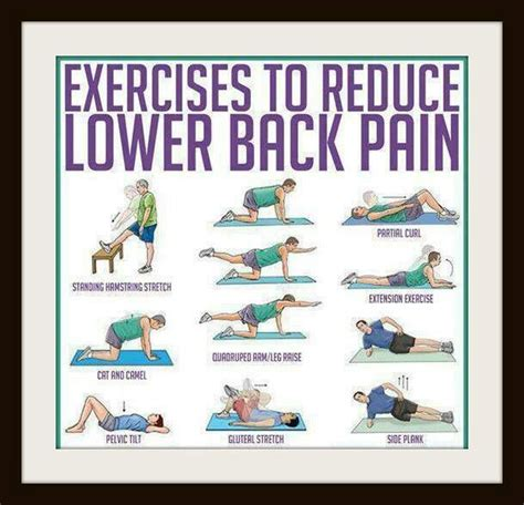 24 best exercises to reduce back images on gymnastics exercise workouts and