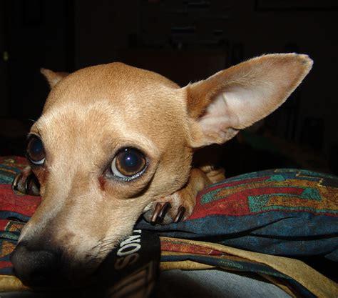 ear problems ear problems pet365