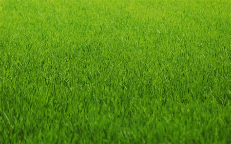 Green Grass green grass background texture photo green