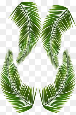 translate palm leaves from english to vietnamese lingua fm translate palm leaves from english to vietnamese lingua fm