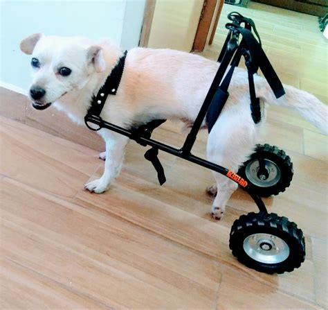 silla ruedas para perros silla de ruedas para perros gatos arnes 1 500 00 en