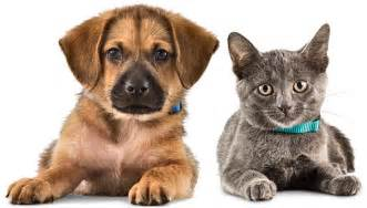 Holistic Pet Care - Holistic Health for Pets and Natural Products Pet