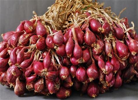 Benih Bawang Merah Terbaik pusat penelitian dan pengembangan hortikultura
