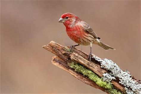salmonellosis in songbirds in winter healthy wildlife