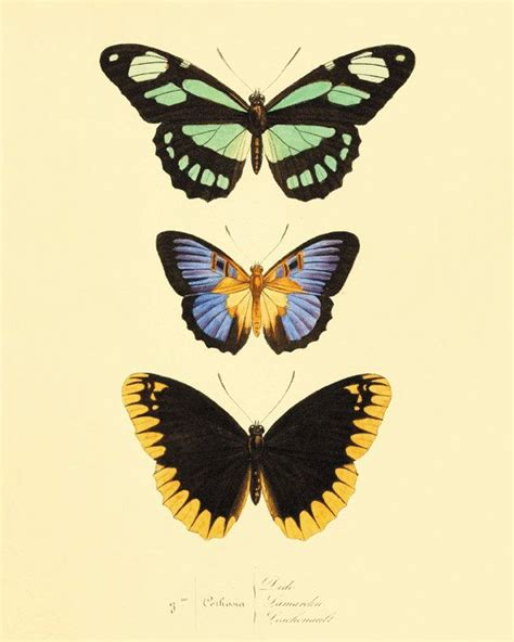 free printable butterfly wall art green black vintage butterfly print nature print natural