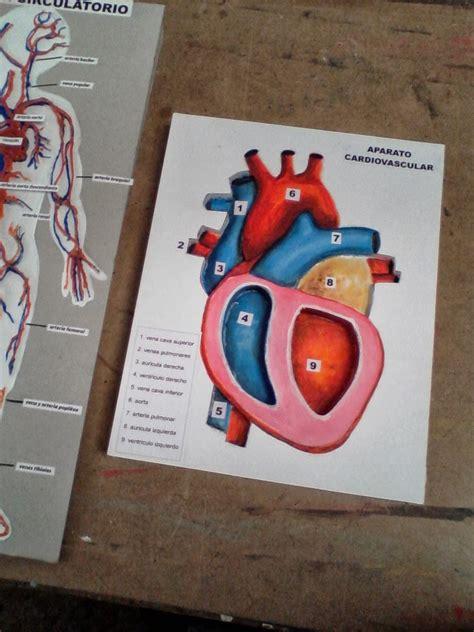 como hacer maquetas de corazon maquetas dibujos y dise 209 os aparato circulatorio y coraz 211 n