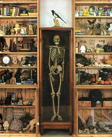 Cabinet Of Curiosities by Dion Cabinet Of Curiosities Cabinets Of Curiosities