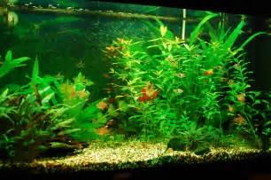 fish freshwater aquarium talk