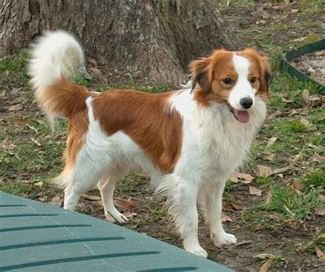 medium sized breeds 147 best images about medium breeds on