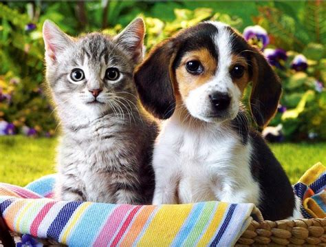 kittens and puppys 816x619px 103 57 kb cats and dogs 352490
