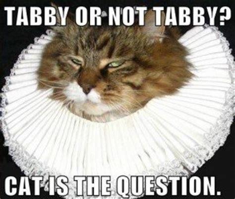 Random Cat Meme - memento merry really random shakespeare shakespeare