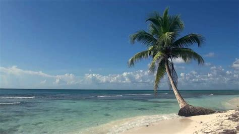 relaxing  hour video   tropical beach  blue sky