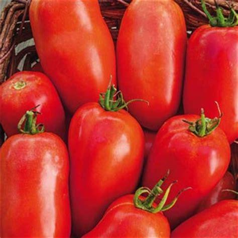 Tomato Roma Vf roma tomato roma tomato seeds