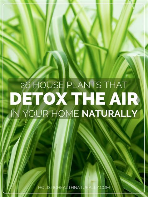 The Plant Detox Book 1000 ideas about hanging plants on window