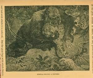 Jaguar Vs Gorilla Gorilla Vs Leopard Jacob Covey Flickr
