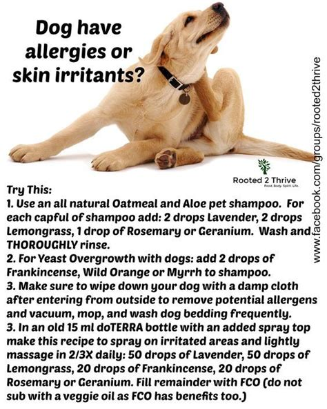 how to help dogs with skin best 20 itching ideas on itchy remedies skin itching and
