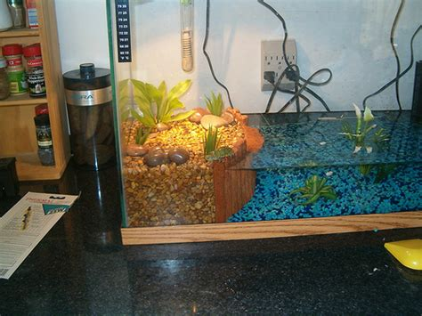 aquarium design services fargo i could sooo help you do this to that big tank you have
