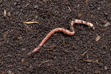 types of garden worms nifty science science news for students