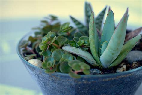 Sukkulenten Pflanzen by Xenobiophilia Sukkulenten Vermehren 9 Tipps