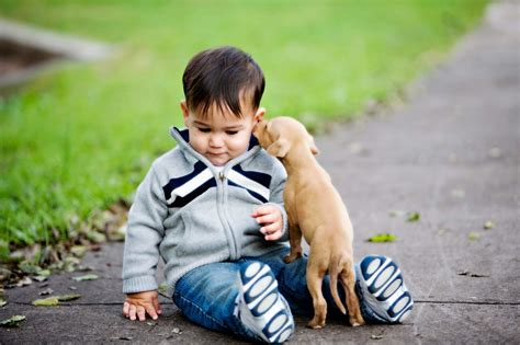 pet store where you can play with puppies 50 secrets your pet won t tell you reader s digest