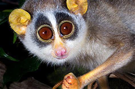 Zoologischer Garten öffnungszeiten by Zoo Frankfurt Tiere Erleben Natur Bewahren